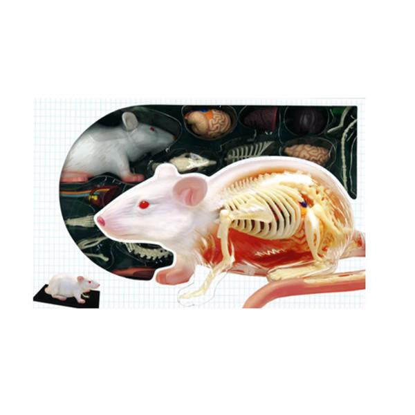 4D半透視白老鼠組合模型