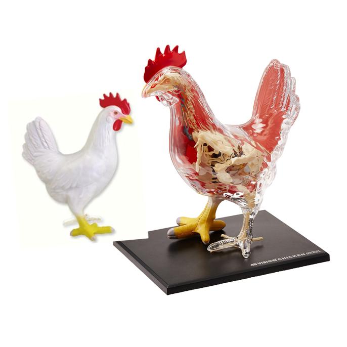 4dmaster,4dvision,4D半透視雞
