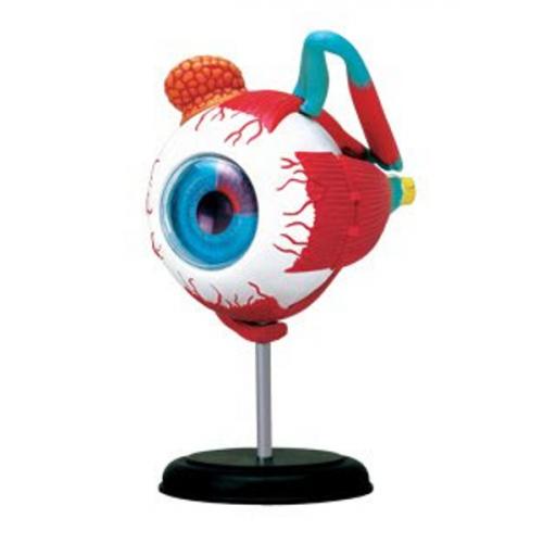 4D眼球解剖模型,4D Vision, 4D Human, 4D Master