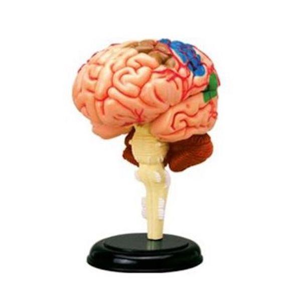 4D人體腦神經組合模型,4D Vision, 4D Human, 4D Master