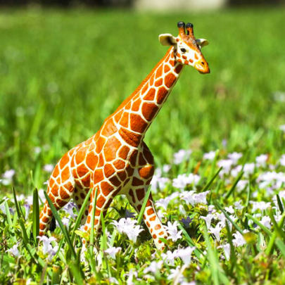 SAFARI動物模型《長頸鹿》眺望非洲