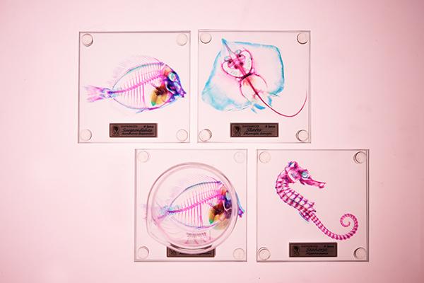 透明魚玻璃杯墊3
