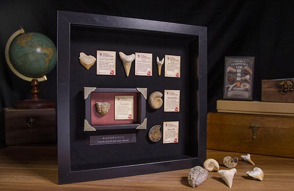 口袋標本箱-化石系列(六款隨機出貨)03