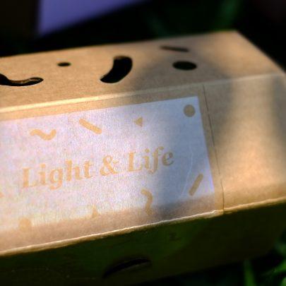 光盒植栽 (2)
