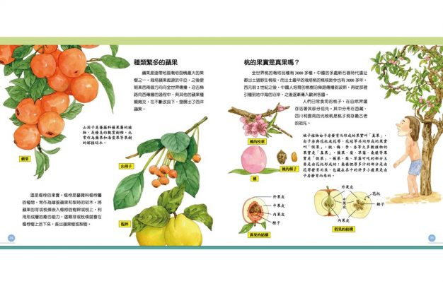 我的第一本植物演化圖鑑—從被子植物稱霸到人與植物共生_10