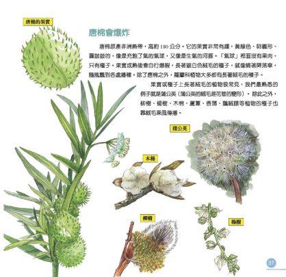 我的第一本植物演化圖鑑—從被子植物稱霸到人與植物共生_4