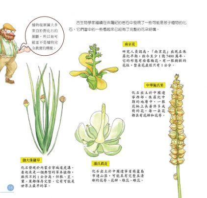 我的第一本植物演化圖鑑-從藻類演化到花的誕生_15