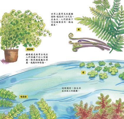 我的第一本植物演化圖鑑-從藻類演化到花的誕生_7