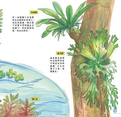 我的第一本植物演化圖鑑-從藻類演化到花的誕生_8